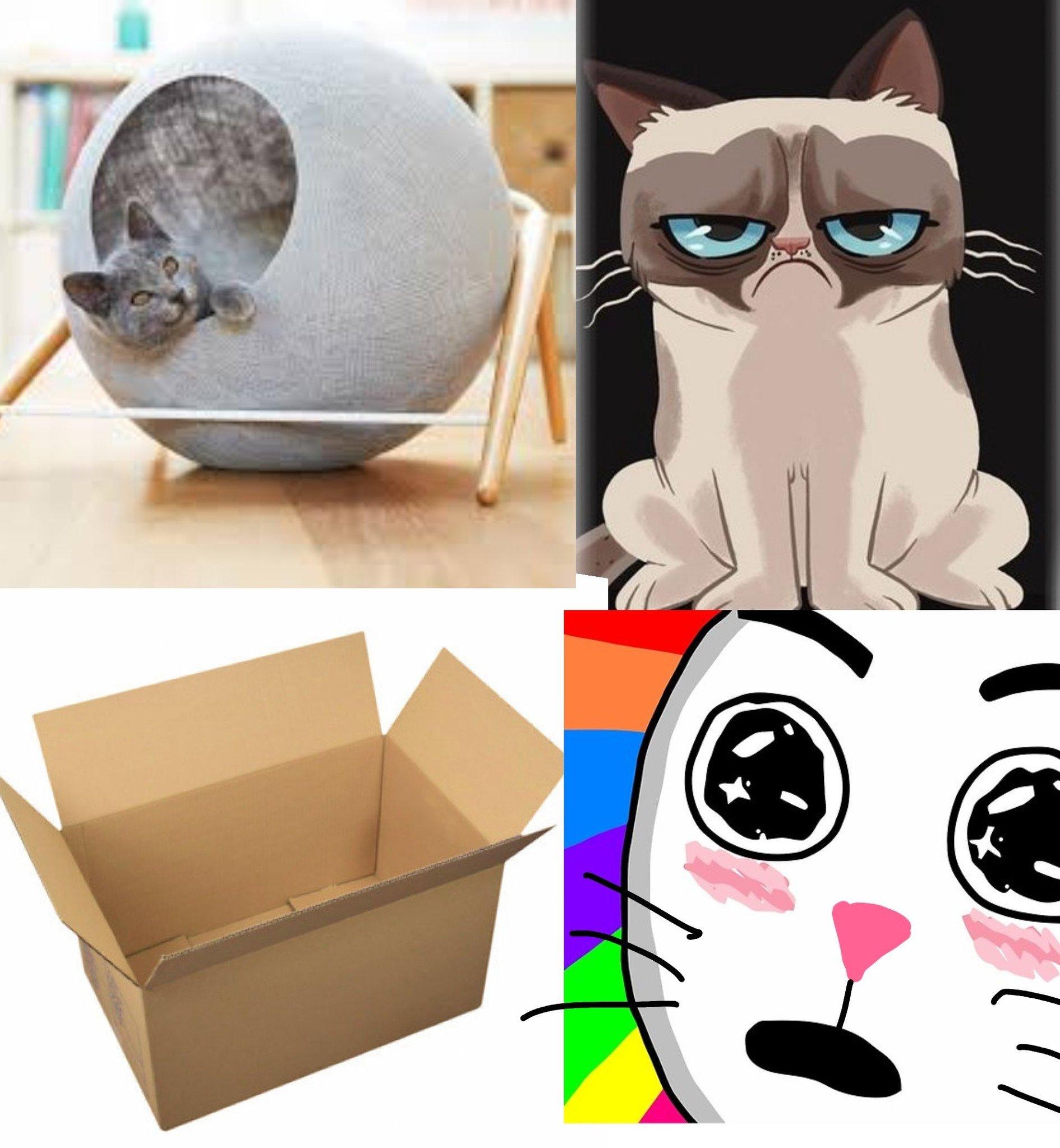 Les chat - meme
