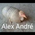 Alexandre não existe, os Alexandres na verdade se chamam Alex André, Alexandre é só apelido