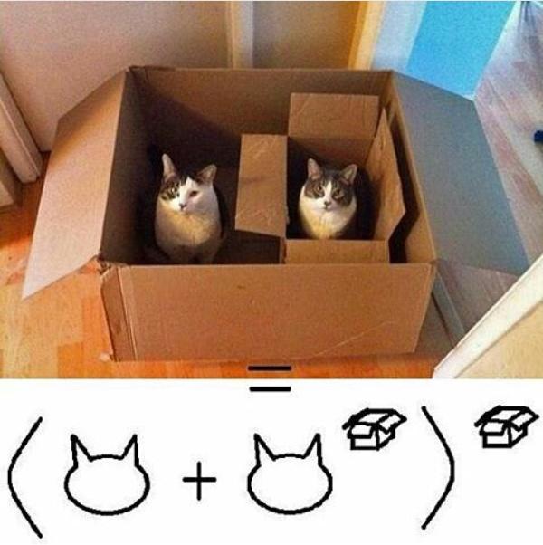 Matemática felina - meme