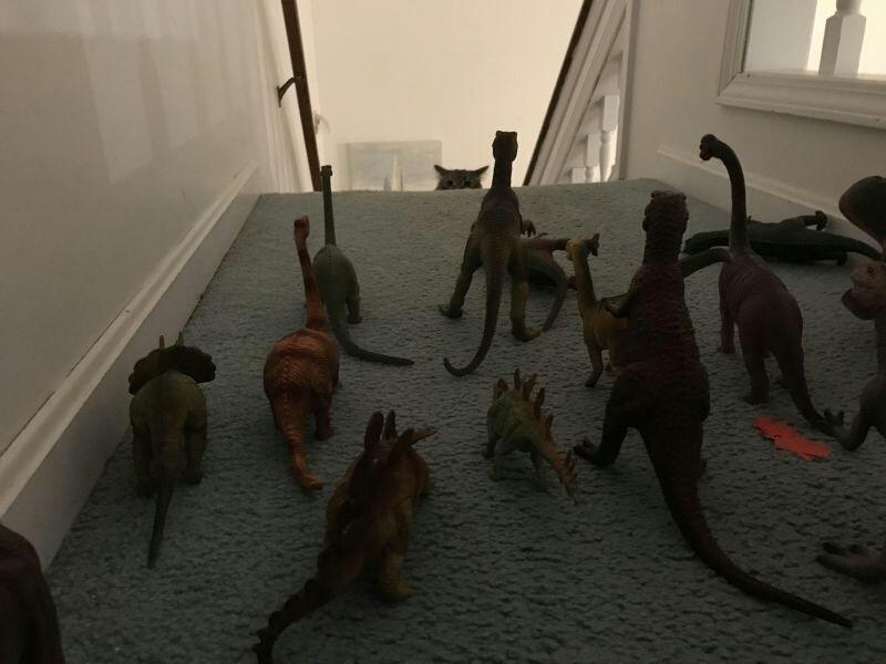 Quand tu veux pas que ton chat monte à l'étage - meme