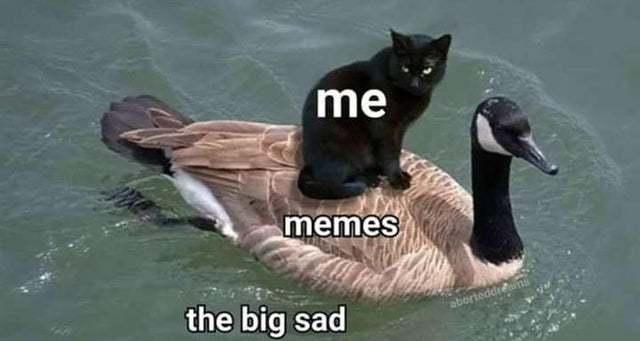 Helps me every time - meme