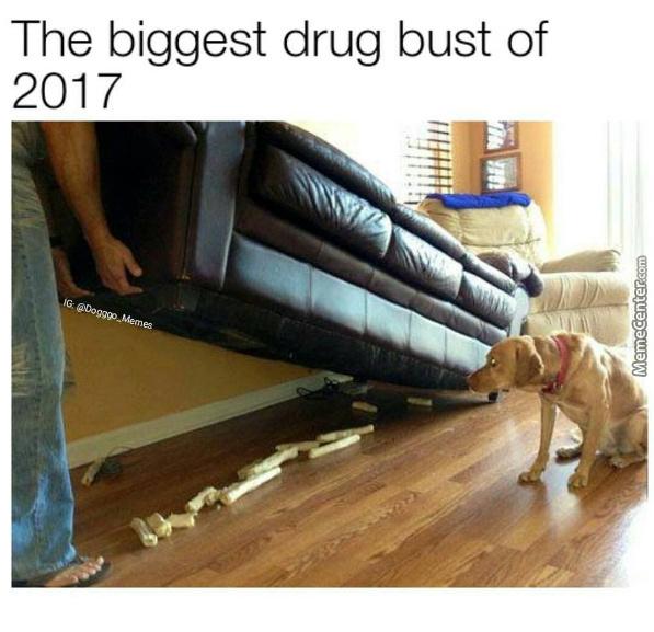 Bad doggo :D - meme