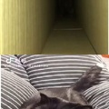 que verga ese gato tienes problemas