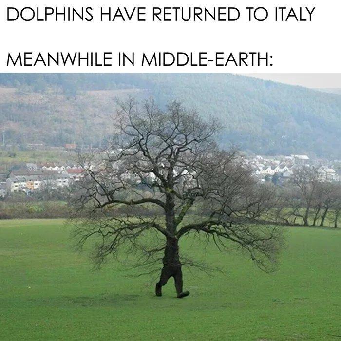 The trees r speaking - meme
