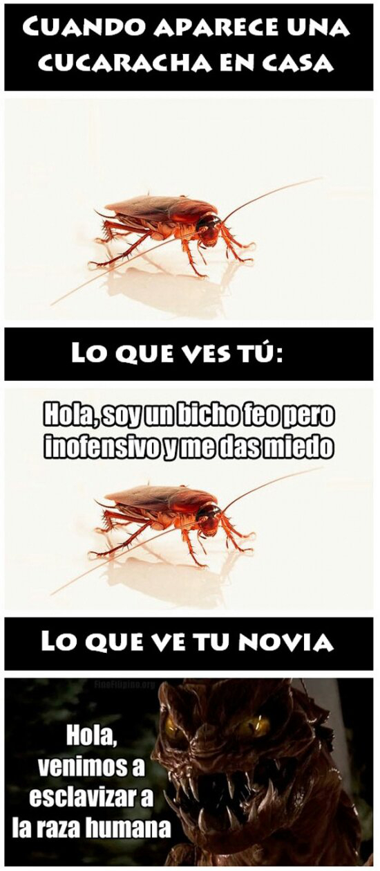 Cucarachas - meme