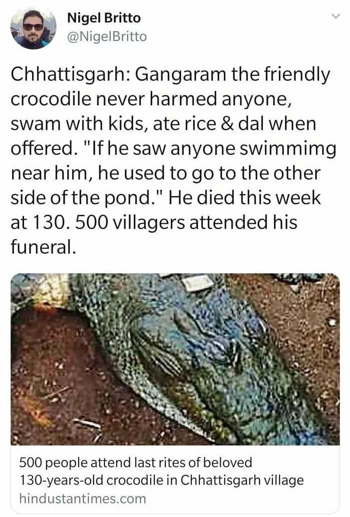Good boi crocodilo - meme