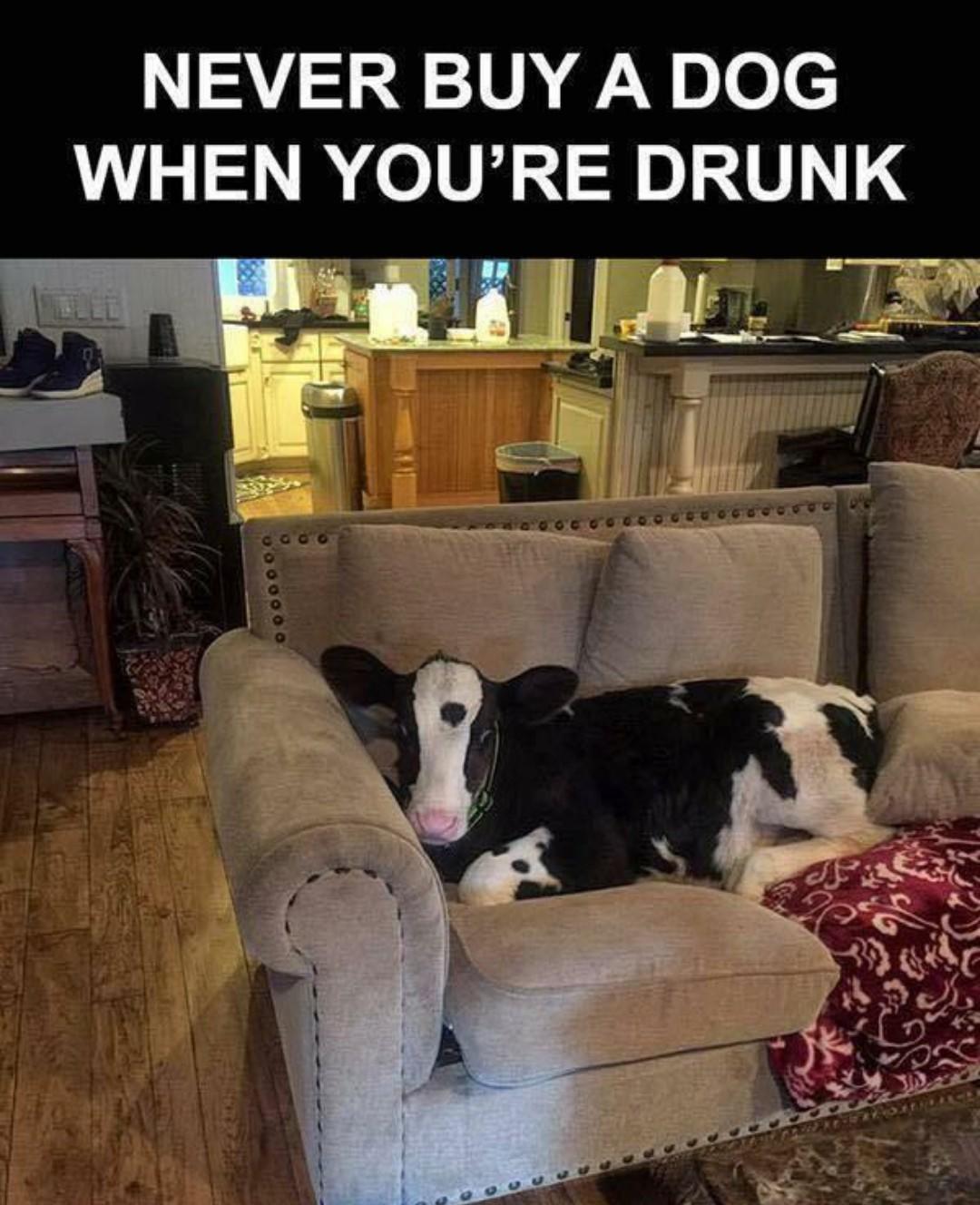 Beer goggles - meme