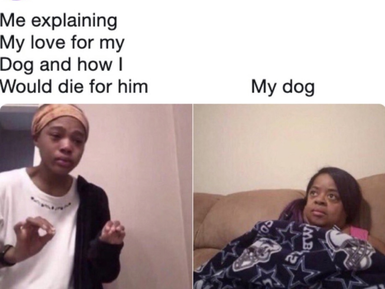 This is probably what my dog thinks too - meme