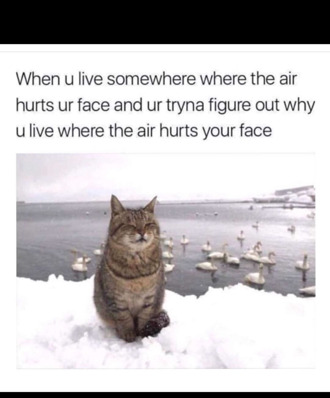 Cold weather - meme
