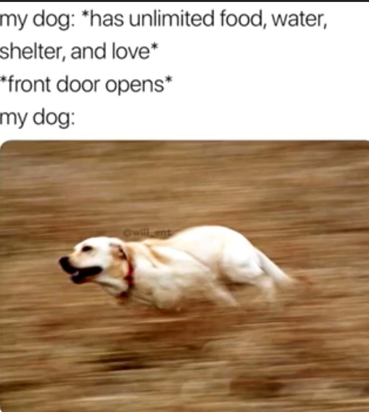 Me dogg - meme