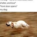 Me dogg