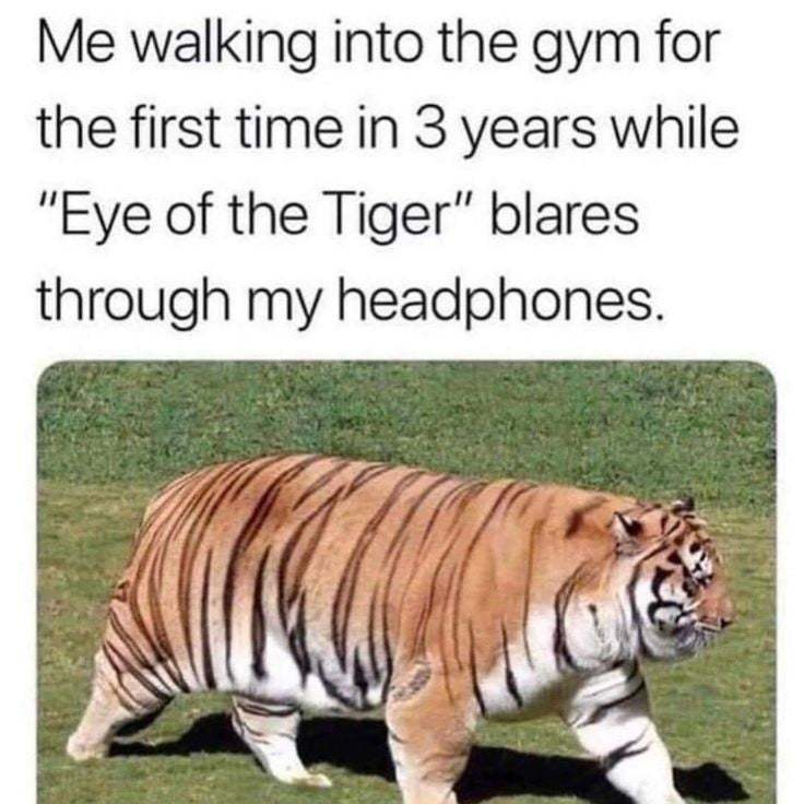 The eye of the tiger is the trill of the fight - meme