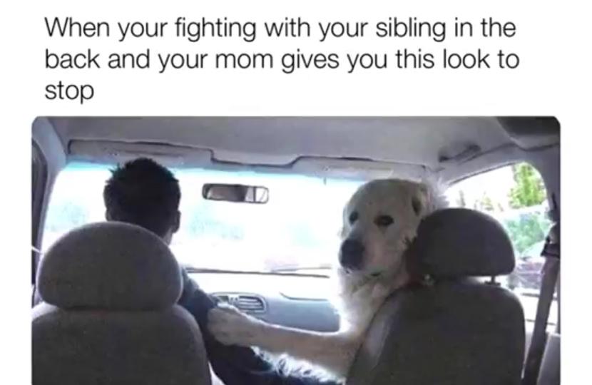 Stop it sons of a bitch! - meme