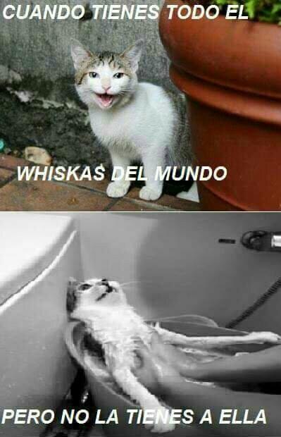 El titulo quiere whiskas - meme