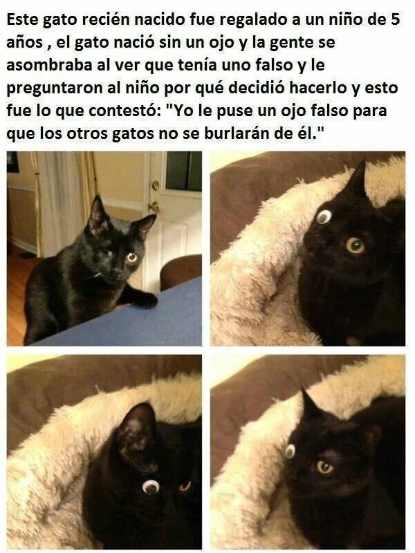 Amen por el gato - meme