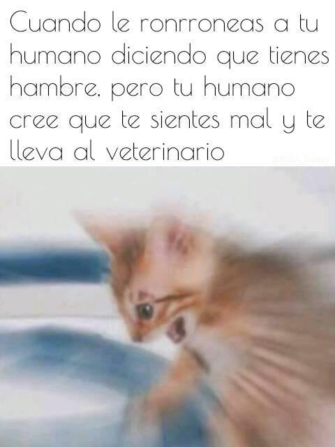 El título lleva a su gato al veterinario. - meme