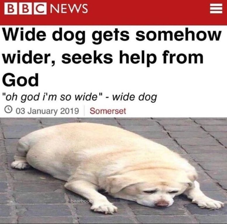 Wide dog - meme