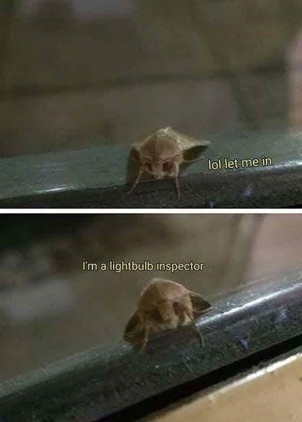 smol lightbulb inspector - meme