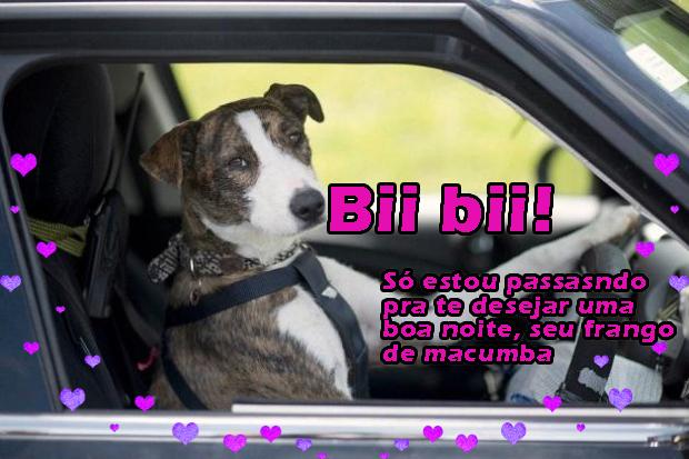 (Tutubarão) Eu sei q ta de tarde e q tem erro de português - meme