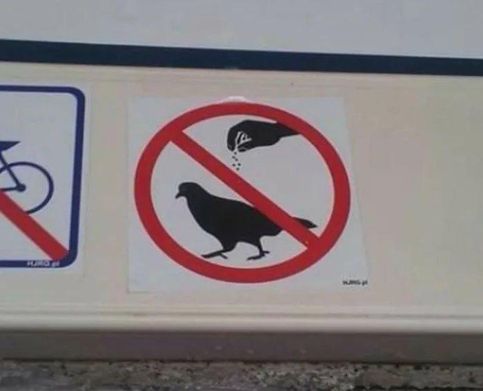 """""""Don't season the birds"""" birdseasoner - meme"""