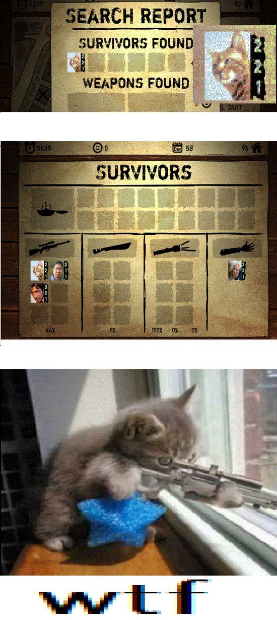 El gato francotirador: - meme