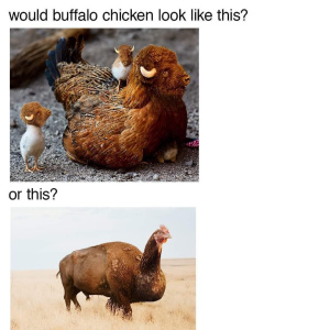 Thy Buffalo Chicken - meme