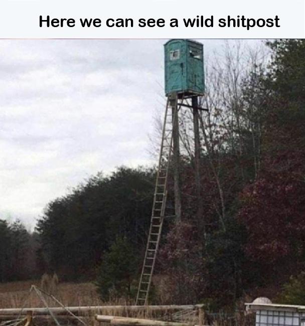nature - meme