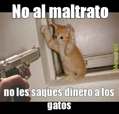 No al matrato gatunal - meme