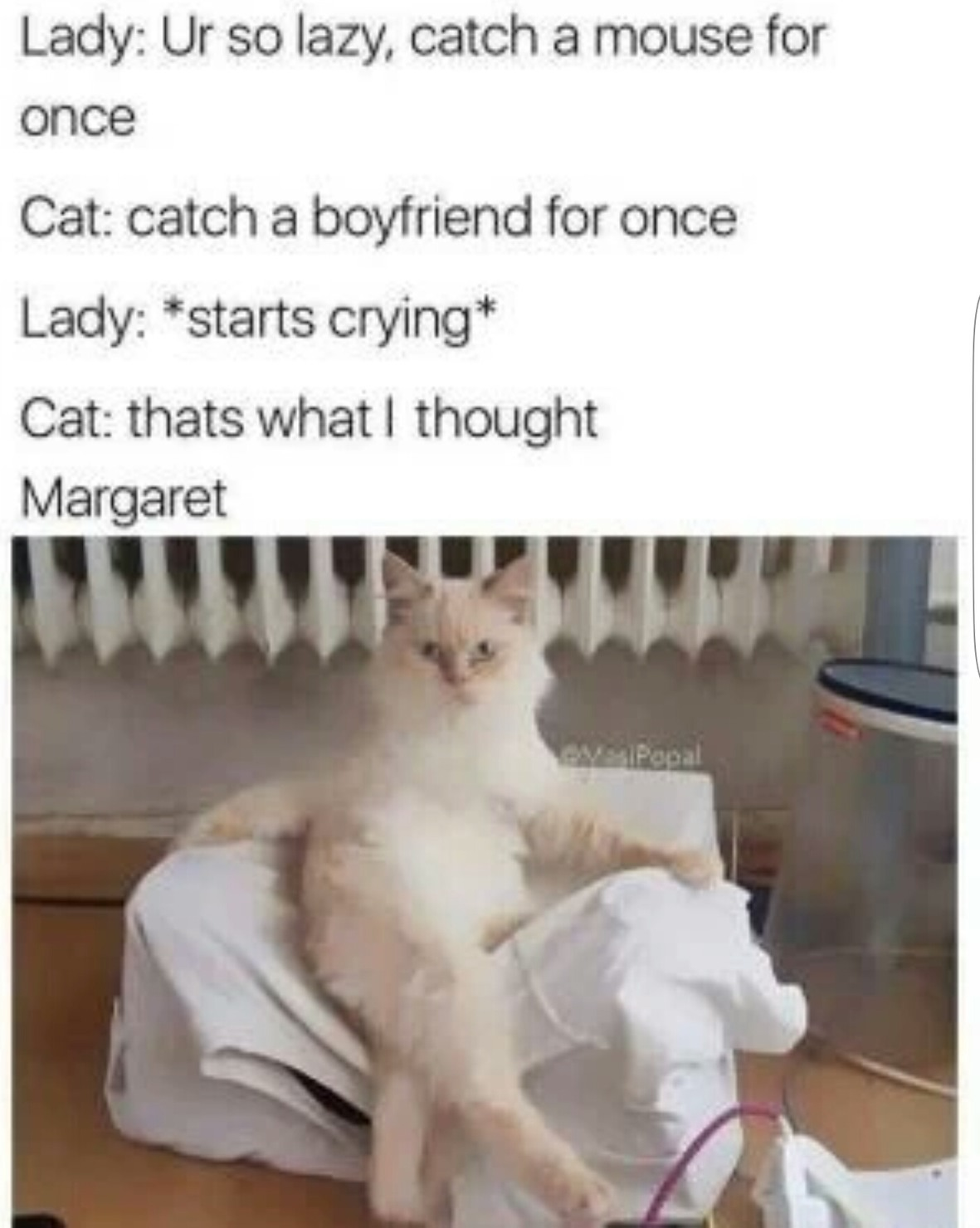 What has you cat told you - meme