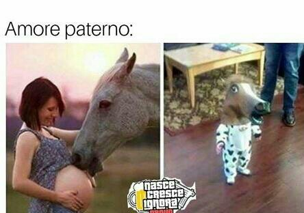 Cavalli belli - meme