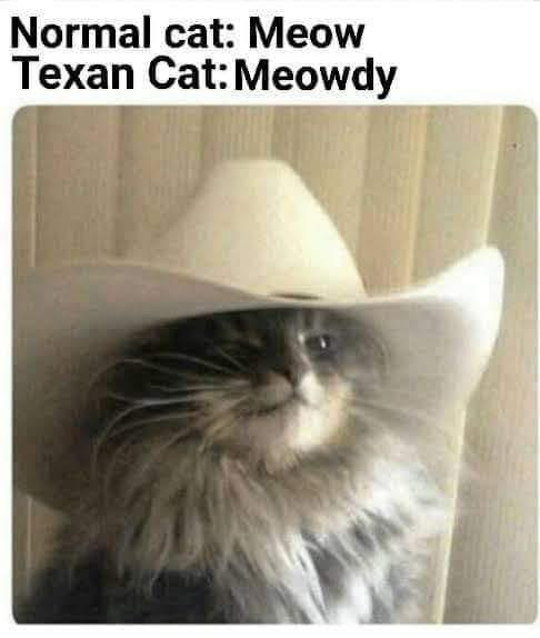 Texan cat - meme