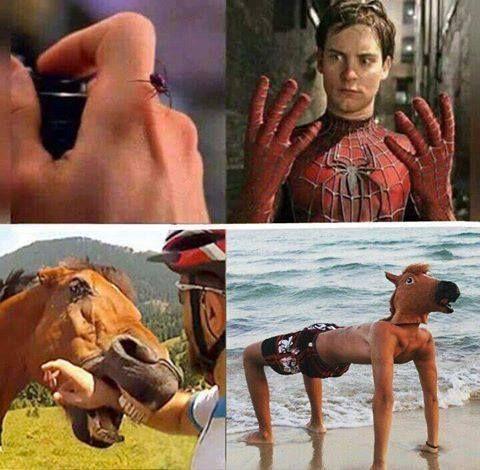 Que te muerda un caballo, lo mas normal de este mundo - meme