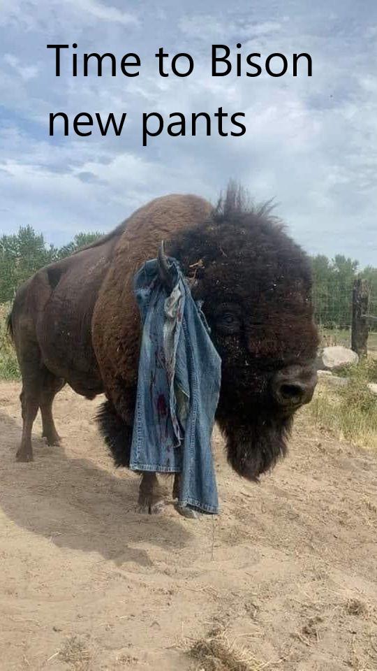 Yellowstone Brown Underpants - meme