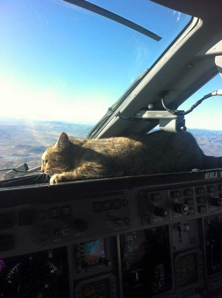Cat in a cockpit. Every cockpit should have this feature installed. - meme