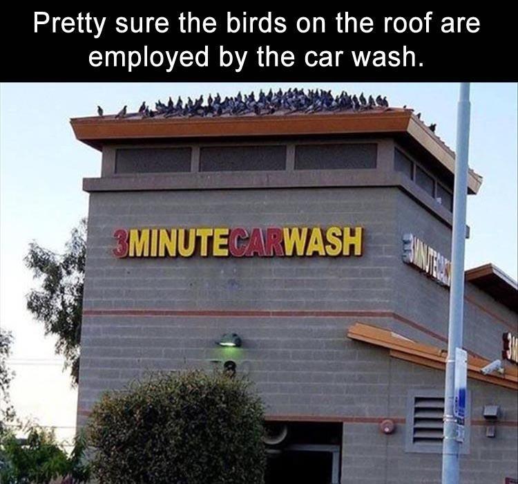 Bird poop - meme