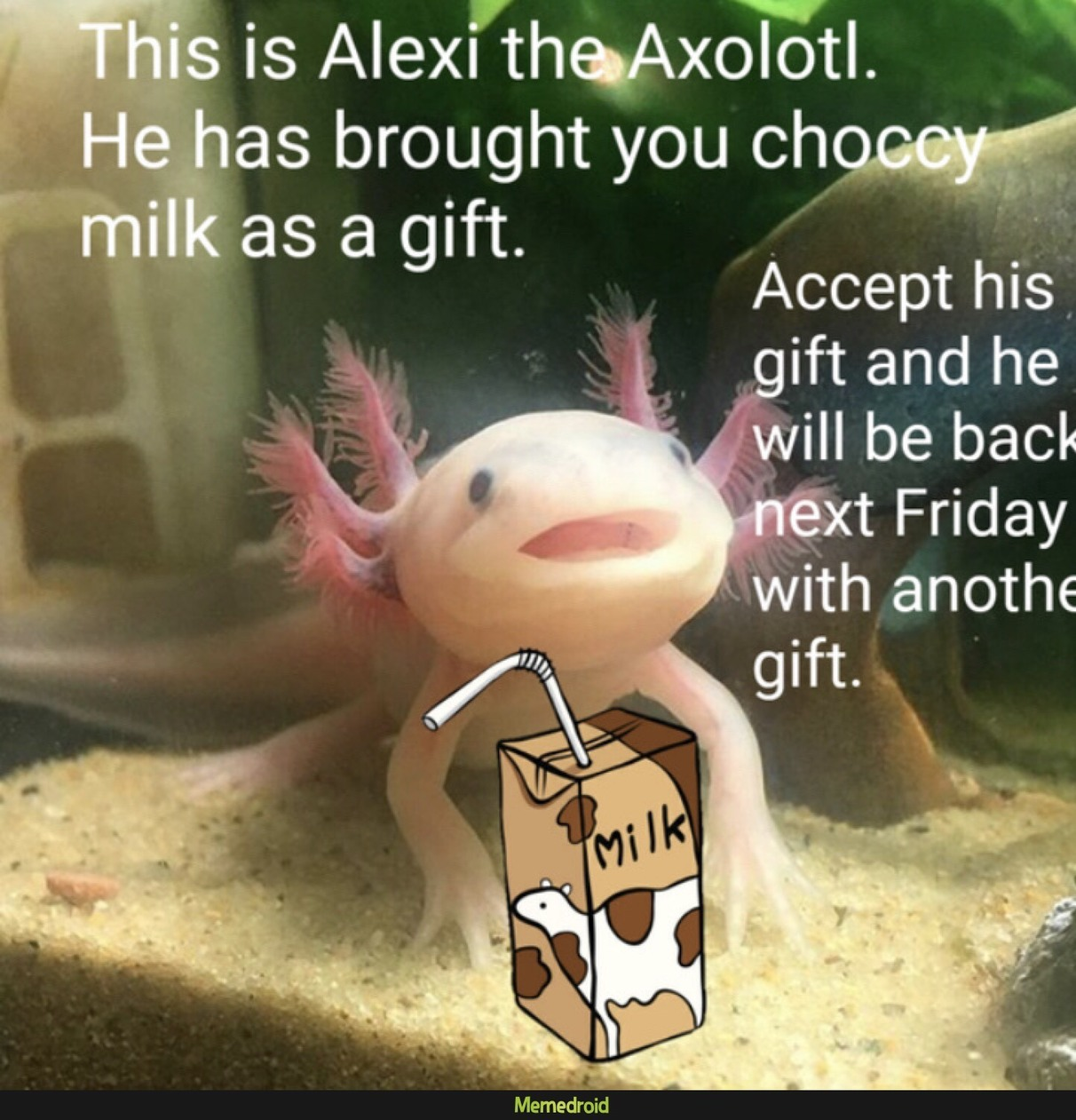 alexi is back! - meme