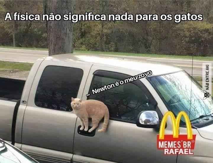 gatos... - meme
