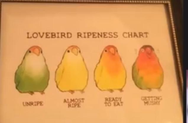 Lovebird ripeness chart - meme