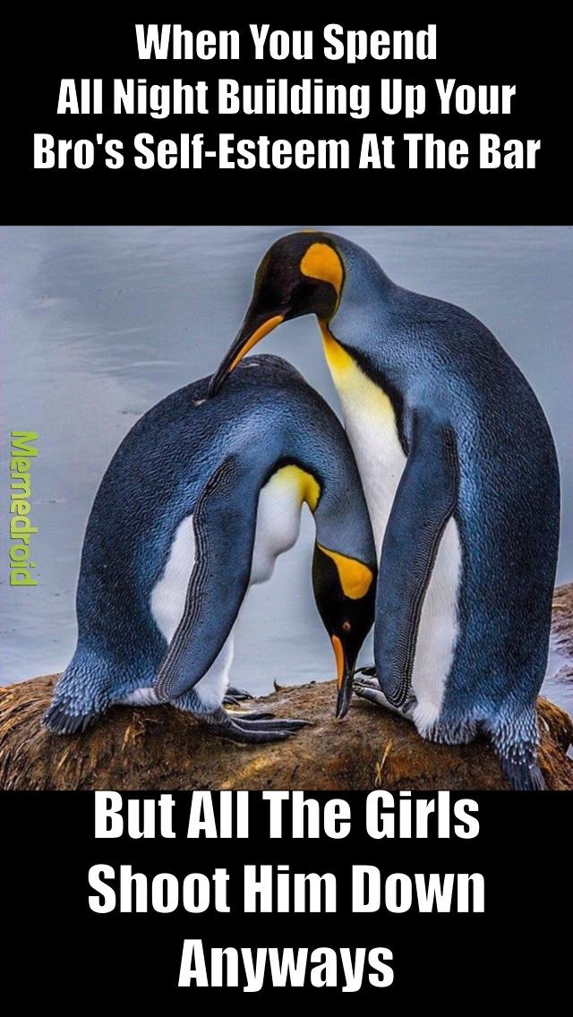 penguin looking sad, bruh - meme