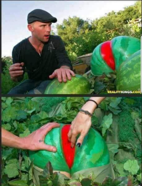 Já colheu sua sua melancia hj? Olhou se tá madura? - meme
