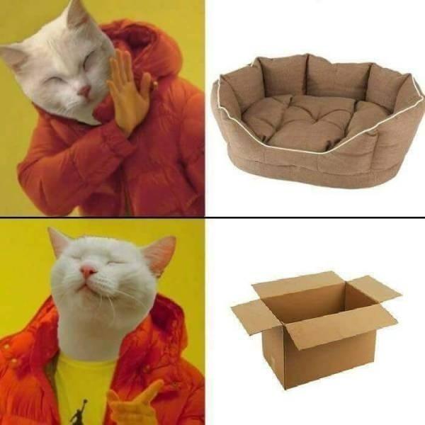 Drake catman - meme