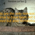 Cat facts return if moderators allow it