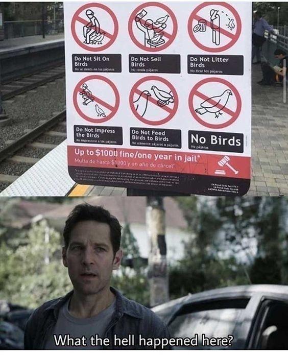 No birds - meme