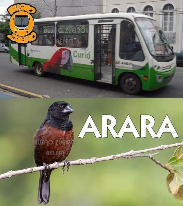 empresas de Belém são Batatã - meme
