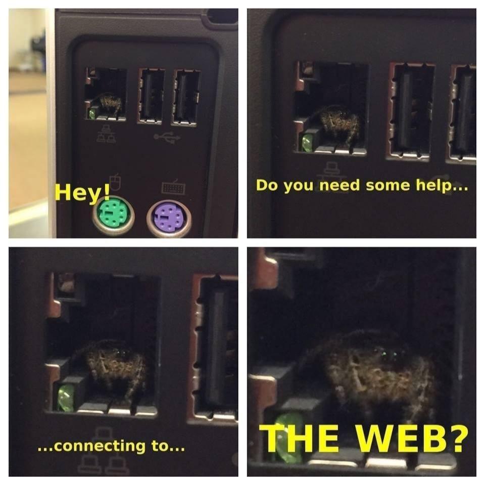 Web - meme