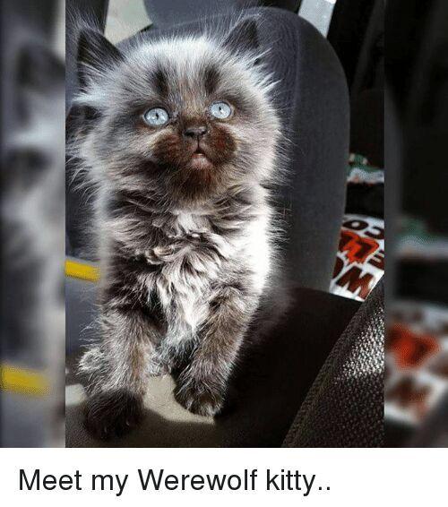 The Best Werewolf Memes Memedroid