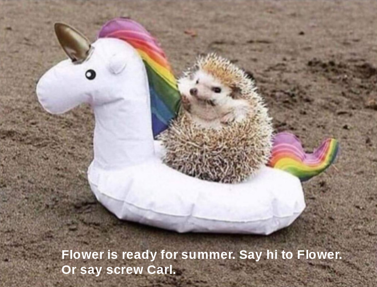 Flower is the new Carl - meme