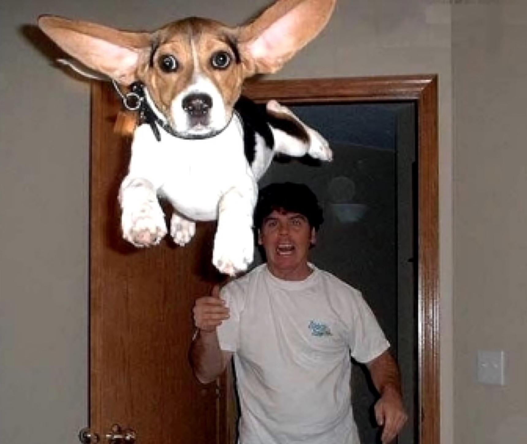 joder perro deja de volar - meme