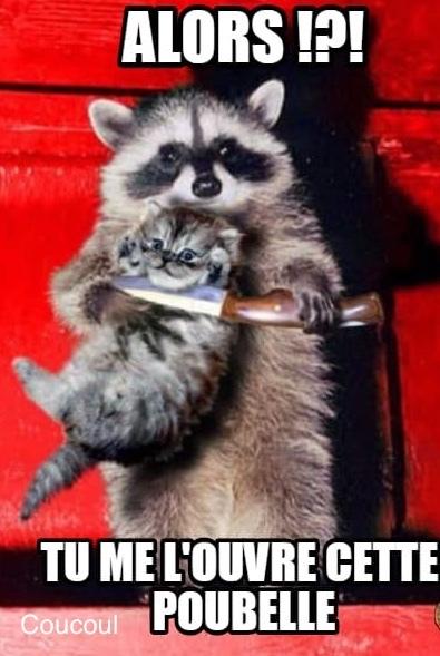 Chat fait peur - meme