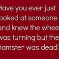 You killed my hamster you basterd